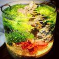 人気のボトルアクアリウム。作り方やおすすめの熱帯魚など紹介。
