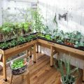 家庭菜園はプランターで簡単に始めよう!必要な材料と品種を紹介
