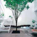 人気の庭木を取り入れる!自宅を華やかガーデニング
