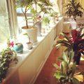 お気に入りの「植物」をダメにしない、冬だからおさらいしたい3つの基本